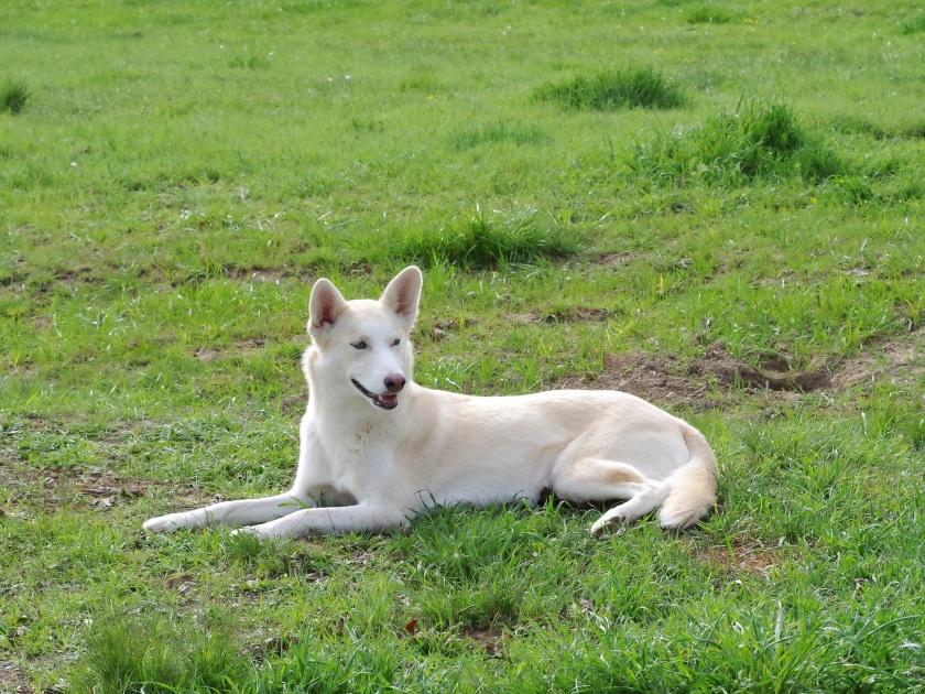 Zoe - Husky Pup | Life by Ky Blog