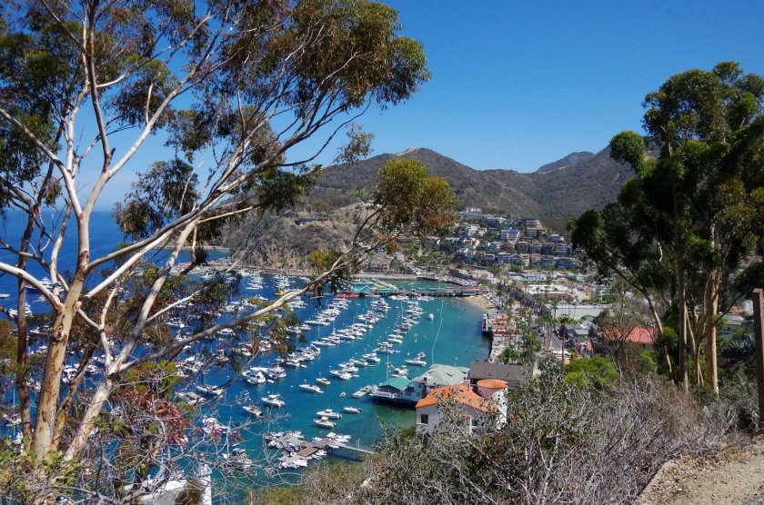 Catalina Island | Life by Ky Blog